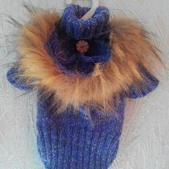 Свитер с капюшоном для маленькой собачки или кошки