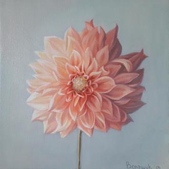 Георгин, картина маслом на холсте, нежный цветок, авторская живопись художника Волощук Мирославы