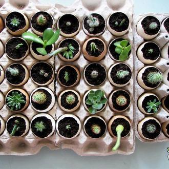 Кактусы, суккуленты и другие растения в яичной скорлупе