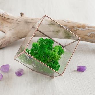 Флорариум Куб 15х15 см