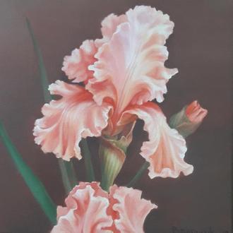 Ирис, картина маслом на холсте, размер 24х24см