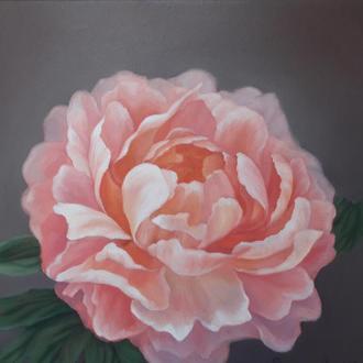 Розовый цветок пион, картина маслом на холсте, размер 24х24см.