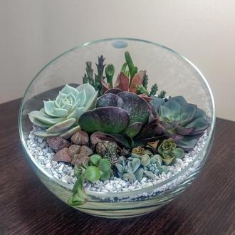 Флорариум шар с диагональным срезом