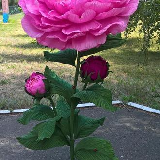 Большие ростовые цветы
