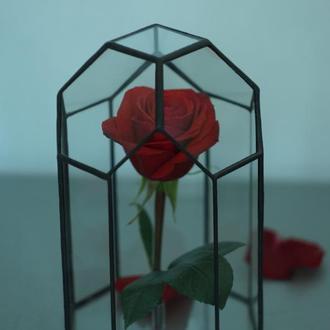 Стабилизированная роза в флорариуме