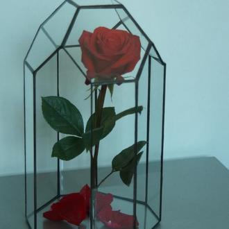 """Стабилизированная роза в флорариуме""""Нежность"""""""