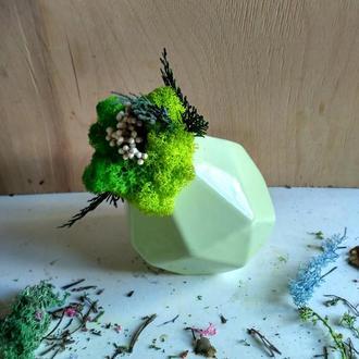 Многогранный мох