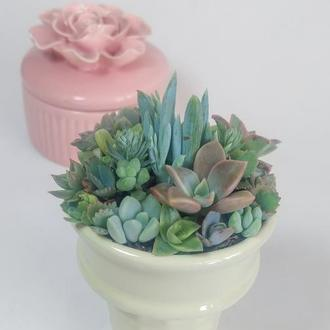 Флорариум в мороженке