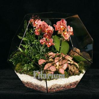 Додекаэдр большой с орхидеей