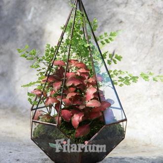 Флорариум с декоративными растениями