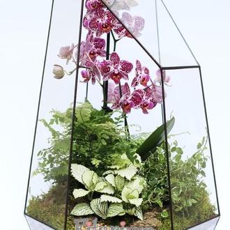 Флорариум скошенный с орхидеей