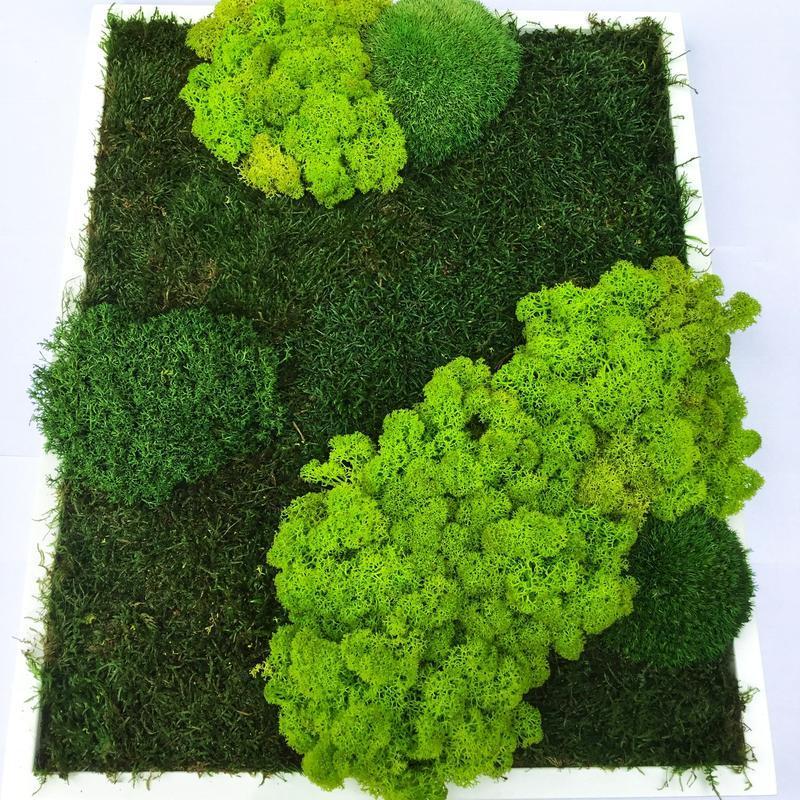 Картина зі стабілізованого моху