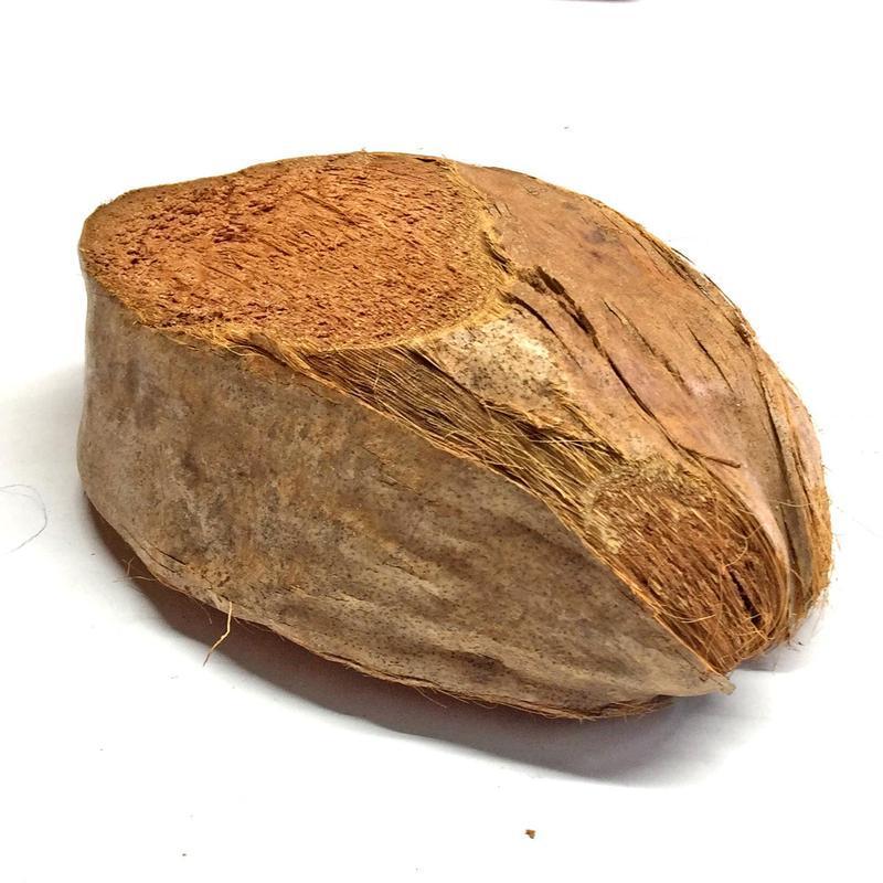 Скорлупа кокоса в наружной оболочке (половинка)