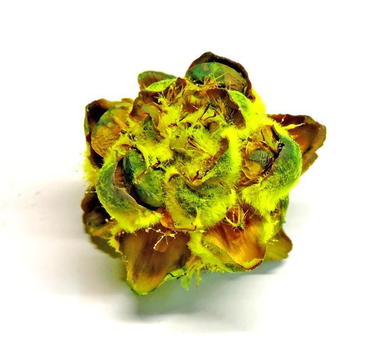 Сухоцвет Velvet Flover желтый