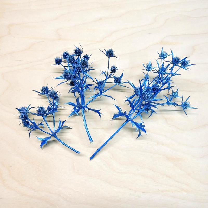 Сухоцвет Camelthorn окрашенный синий