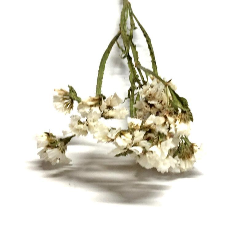 Сухоцвет Limonium белый