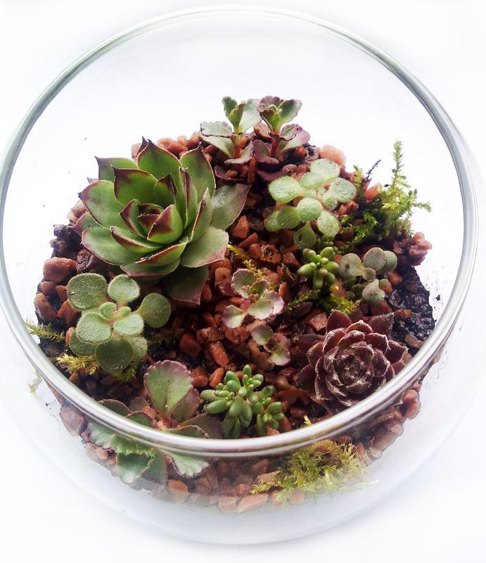 Мініатюрний, ніжний флораріум