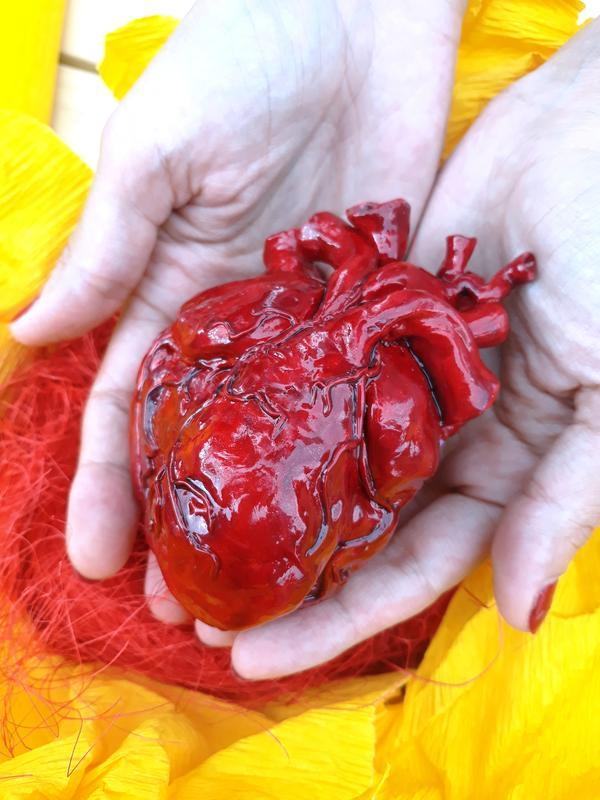 Анатомическое сердце человека