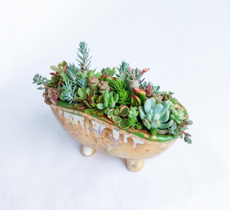 Флорариум в керамической ванночке