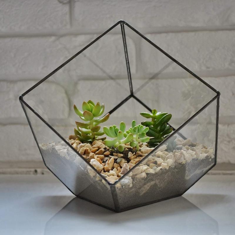 Флораріум куб великий
