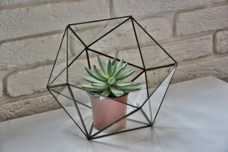 флораріум великий трикутник