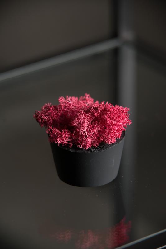 Бетонне кашпо з червоним мохом (набір з 3 шт)