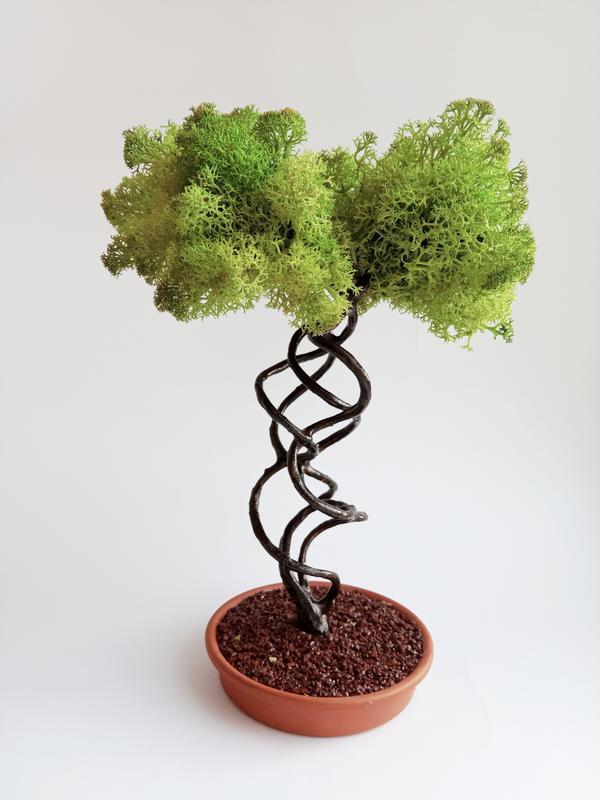 Дерево из натурального стабилизированного мха