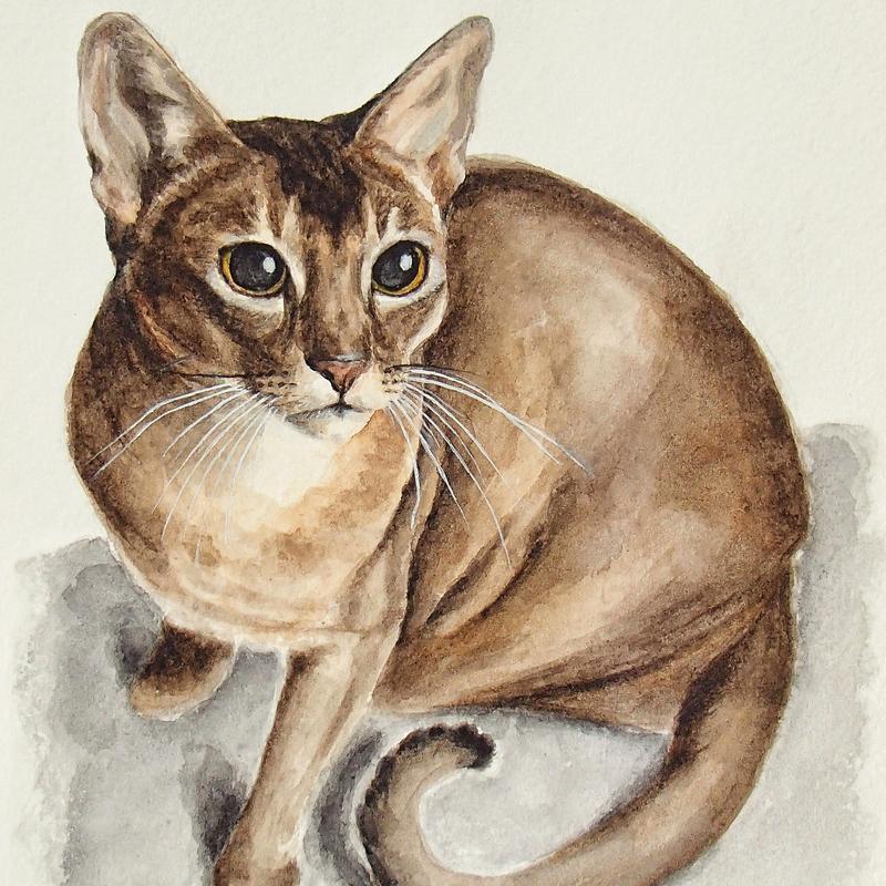 Портрет домашнего любимца, акварель, А4