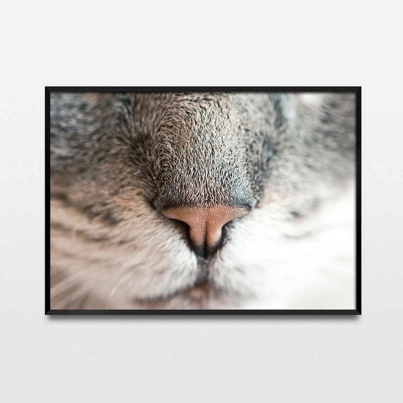 Фотопостер Кошка