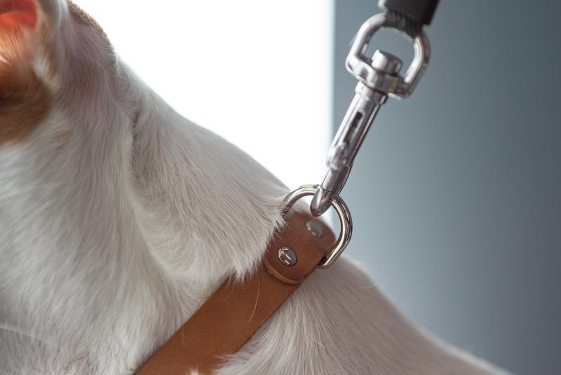 Нашийник для собаки з натуральної шкіри, на вибір 14 кольорів 0184