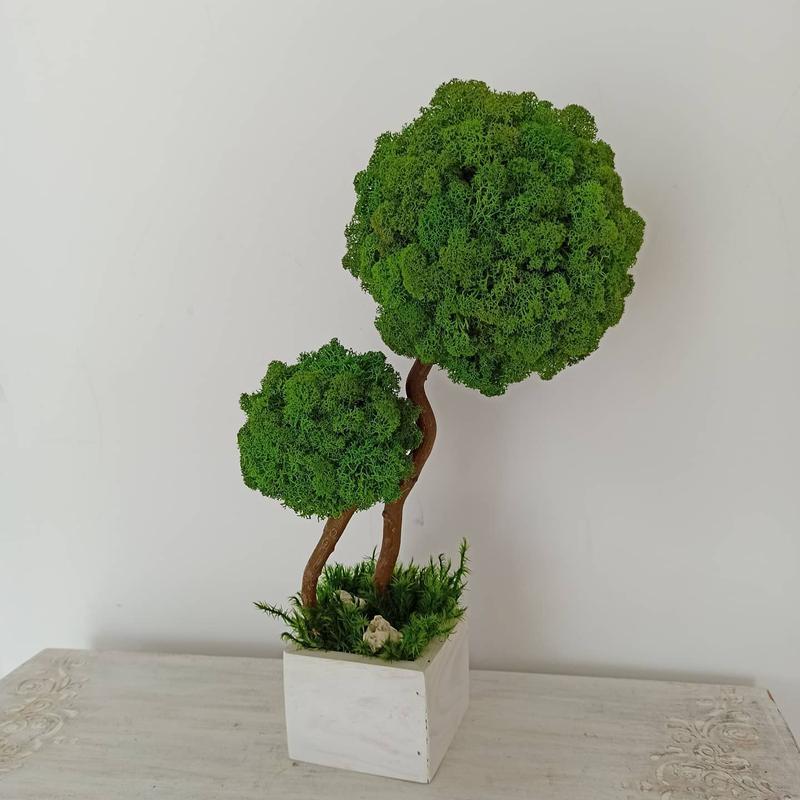 Дерево ( топиарий) из стабилизированного мха