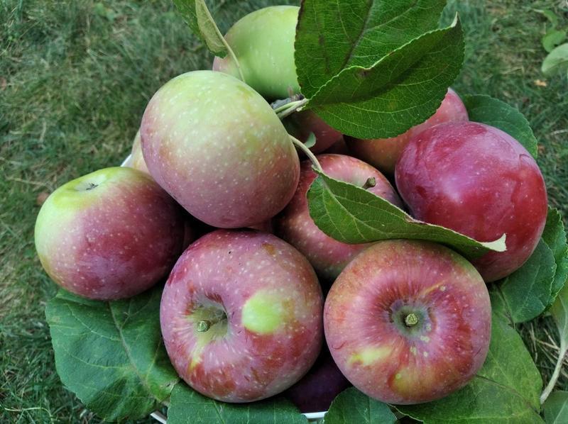 """Джем """"Яблоки + вишня"""" (пюре) 250 мл"""