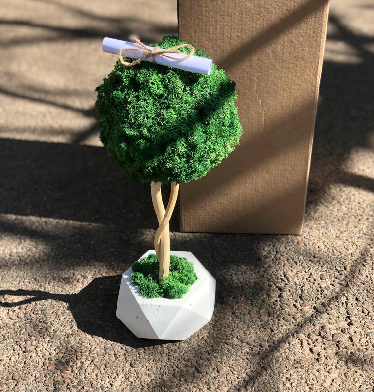 Декоративное дерево из стабилизированного мха