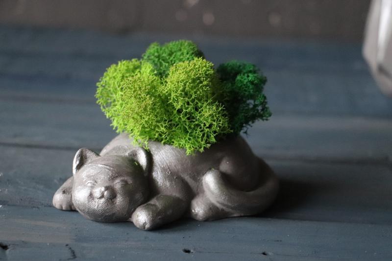 """Горщик з стабілізованим мохом """"Сірий кіт"""""""