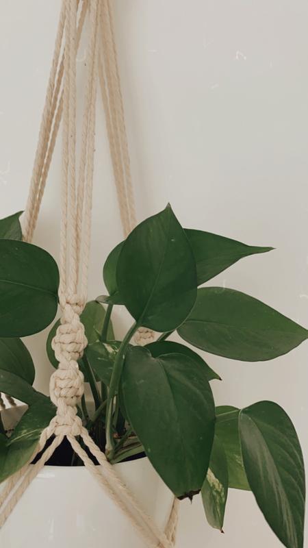 Макраме кашпо Подвес для цветов Кашпо на стену Декор для растений Настенное кашпо