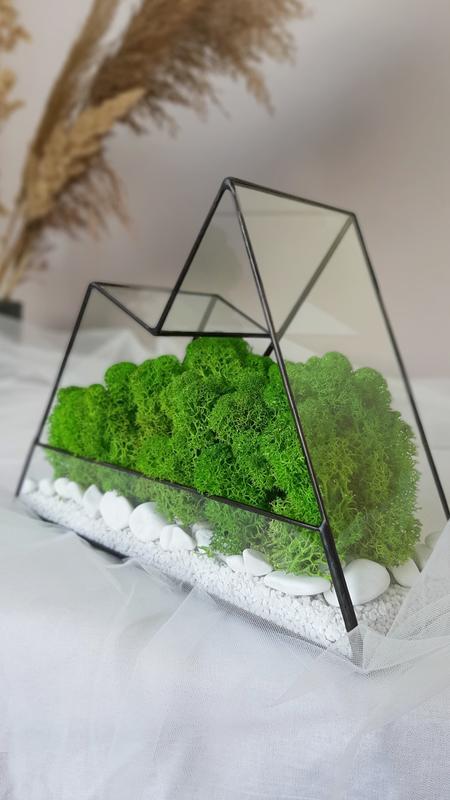 Флорариум со мхом горы, флораріум з мохом, моссариум, мосаріум