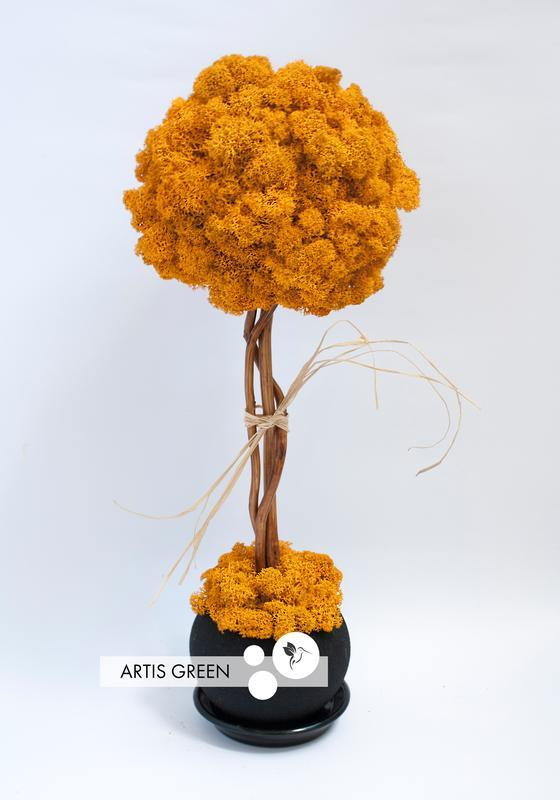 Дерево, топіари з стабілізованого моху, Orange